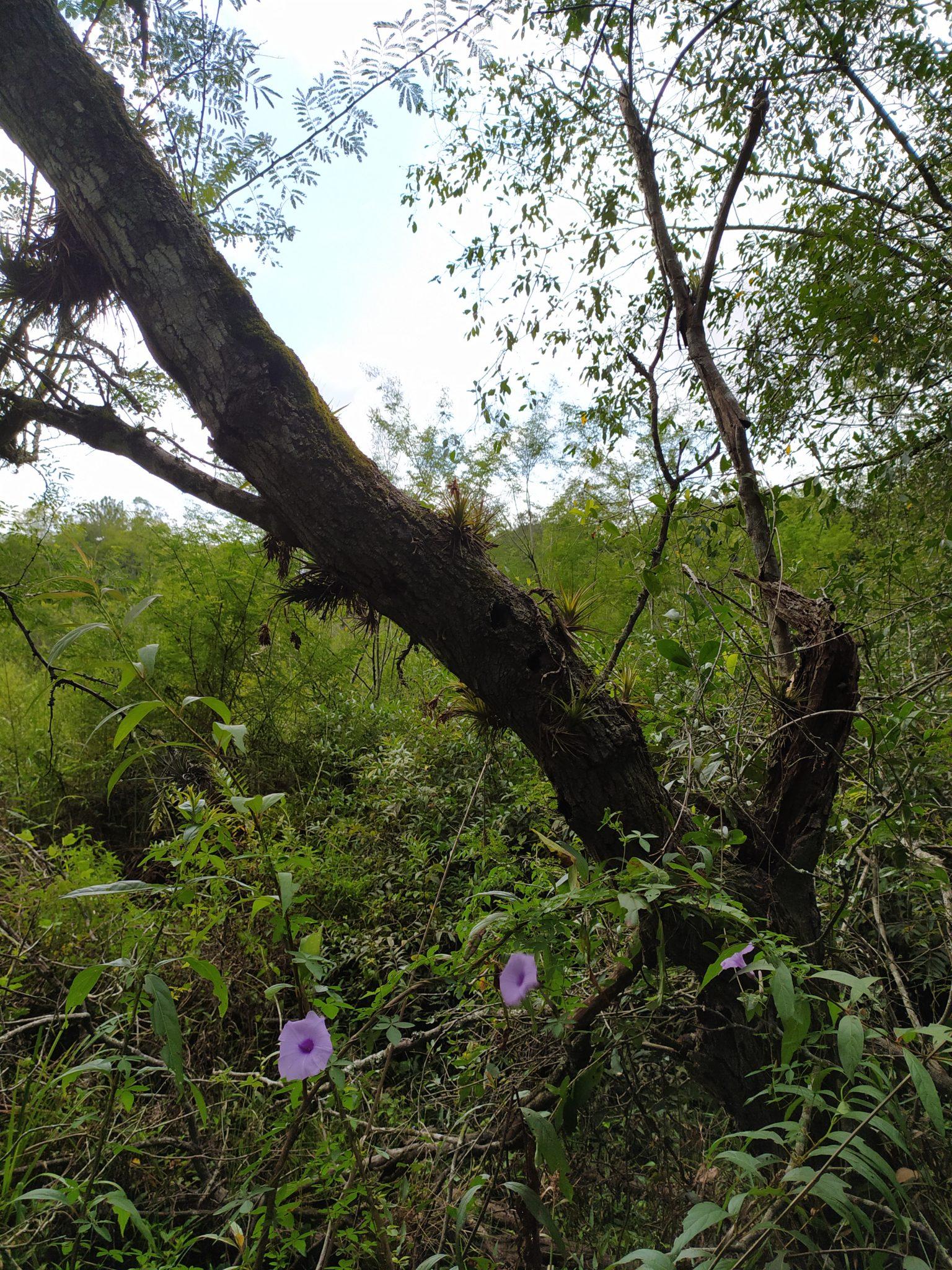 Área de Preservação Natural Marcher